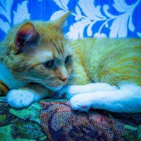 Любимый кот :: Ирина