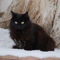 Первый снег. :: Lara