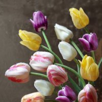 Тюльпаны :: Ульяна Загуменная