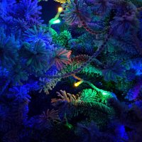 Снежные украшения елки :: Александр