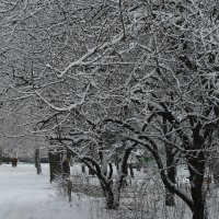 Вот снег укутал белой шалью город. ... :: Валентина ツ ღ✿ღ
