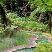 ручеек в лесу :: Natalya секрет