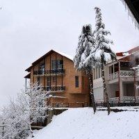 Зима в Кахетии. :: Anna Gornostayeva