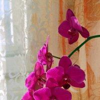 орхидея :: Александр Корнелюк