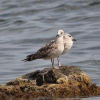 Крым - маленькой чайки крик ... :: Алексей Михалев