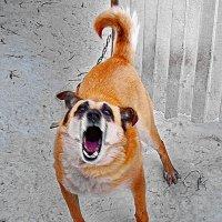 Собака бывает кусачей, только от жизни собачьей! :: A. SMIRNOV
