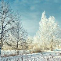берёзы возле дороги зимой :: Valdis Veinbergs