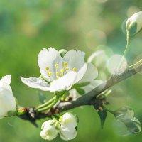 Так хочется весны 3. :: Veyla Vulpes