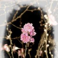 Цветок :: Alexander Demetev