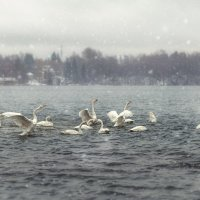 Лебединое озеро. :: Elena Klimova