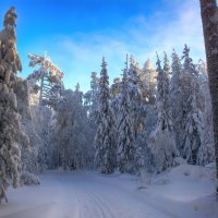А лес стоит загадочный :: vladimir