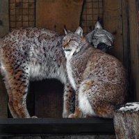 Немного о зверятах в клетках. :: Lidija Abeltinja
