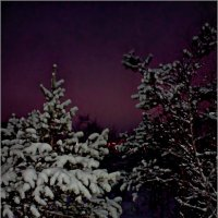 Морозная сказка в Лапландии :: Кай-8 (Ярослав) Забелин