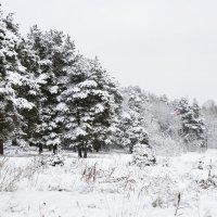Сон зимнего леса :: Марта Маркова