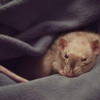 время для сна... :: Алиса Колмагорова