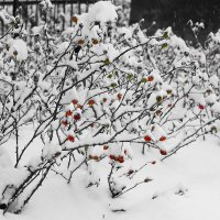 Под снегом. :: Makedonskii