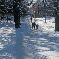 Зимний солнечный день :: Сергей Тарабара