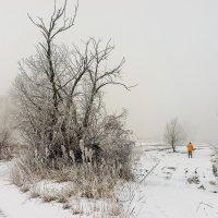 Зимнее утро :: Оксана Лада