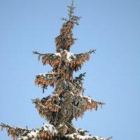 Сказочное дерево :: Светлана Ларионова