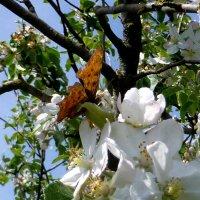Бабочка :: Михаил