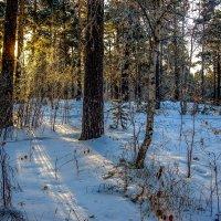 В лесу... :: Rafael
