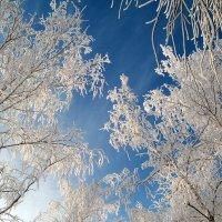 Под январским небом в серебре.. :: Андрей Заломленков