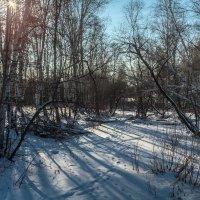 в лесу :: Сергей Сол