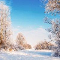 Яркие краски зимы :: Любовь Потеряхина
