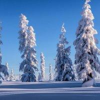 И в зимнем сне застыли великаны. :: Юрий Харченко