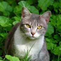 Кошка в траве :: Александр Деревяшкин