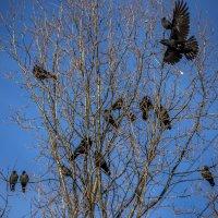 птичьи зимние посиделки... :: Лариса Батурова