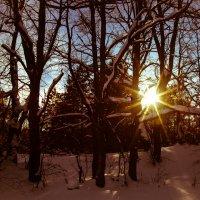 Солнечным днем в лесу. :: Валерий Гудков