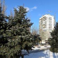 Зимний сквер :: Татьяна Смоляниченко