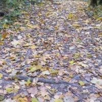 Прогулки по лесу :: Maikl Smit