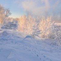 Солнечное утро. :: Андрей Олонцев