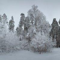 Зимняя. :: Laborant Григоров
