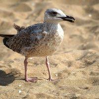 Разговорчивая чайка :: Swetlana V