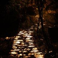 Ночная дорожка в дождливую осень :: Михаил