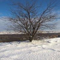 Дерево :: Бронислав Богачевский