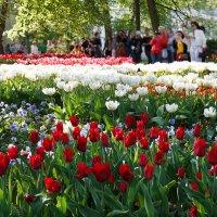 Весна пришла :: Олег Дурнов