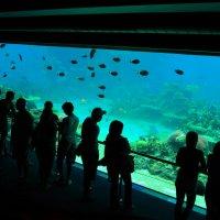 Подводный мир океана. Голд Кост. Австралия. :: Лара Гамильтон