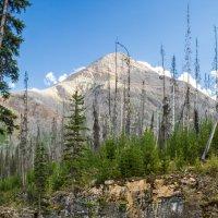 Природа гор :: Константин Шабалин
