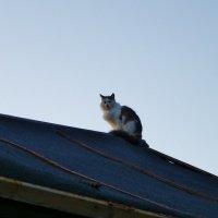 На заре или кот на крыше .. :: Святец Вячеслав