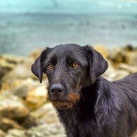 Серьезный пес с рыжей бородкой :: Елена Васильева