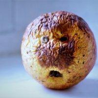 Как не повезло яблоку ... :: Валерий Талашов