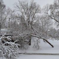 Природа зимой. :: zoja