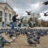 Птичий базар. :: Игорь Карпенко