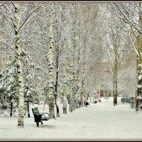 Берёзовая аллея зимой :: Leonid Tabakov