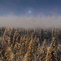 Рассветное золото :: Юрий Трофимов