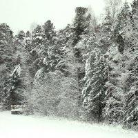 Черно-белая зима :: Наталья Пендюк Пендюк